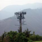 Antena de telefonía camuflada de árbol