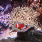 """Come see Nemo"" Ad infinitum @ Shedd Aquarium"