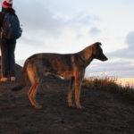 """""""Firulais"""", uno de los perritos del área de los volcanes de Fuego y Acatenango."""