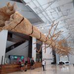 @ Seattle Art Museum